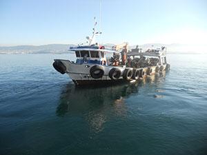 Barco Marisco Punta Sinás